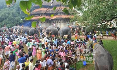 Aanayoottu at Thrissur Vadakkumnathan Temple