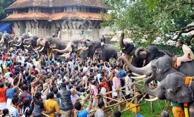 aanayoottu-at-thrissur-vadakkumnathan-temple