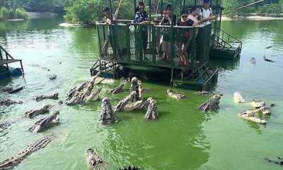 odd-news-chinese-tourists-crocodile-viral-images