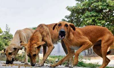 latest-news-six-month-old-baby-injured-in-stray-dogs-attack