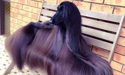 environment-stylish-australian-dog-becomes-internet-sensation
