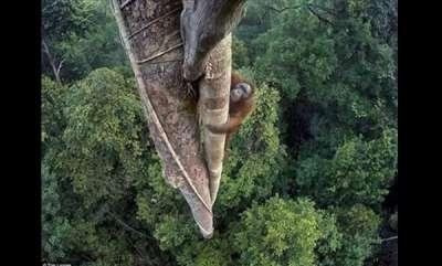environment-world-wildlife-photography-winner-orangutan