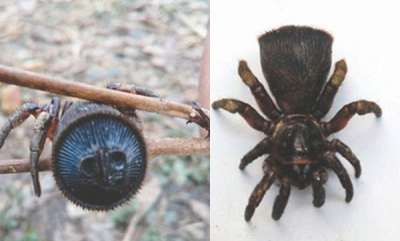 environment-terrifying-ancient-spider-found-by-a-chinese-farmer
