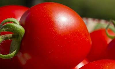health-news-eating-tomatoes-could-increase-male-fertility