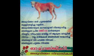 environment-about-dog-rani-in-aruvithura