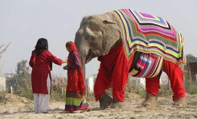 odd-news-activists-for-wild-animals-made-special-dress-for-elephant