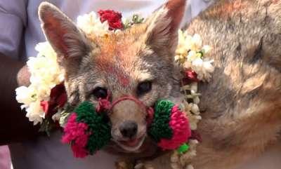 latest-news-fox-jallikattu-organised-in-salem