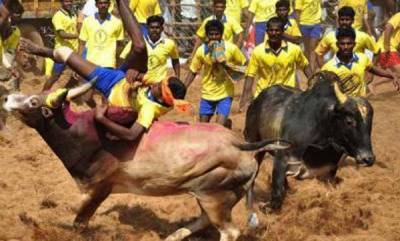 india-normal-life-hit-in-pondy-in-bandh-in-support-of-jallikattu