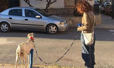 environment-injured-dog-lead-strangers-two-miles-to-an-abandoned-car-where-she-had-given-birth-to-10-puppies