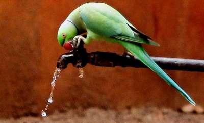 environment-woman-announces-rs-25000-reward-for-missing-parrot