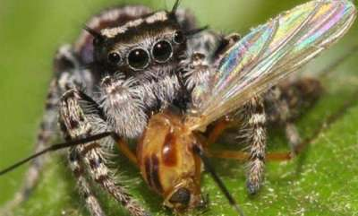latest-news-spiders-eat-400-800-million-tons-of-insects-every-year