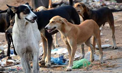latest-news-granny-eaten-alive-by-stray-dogs