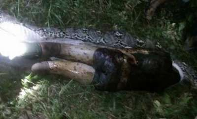 odd-news-body-of-man-swallowed-whole-by-monster-7m-long-python