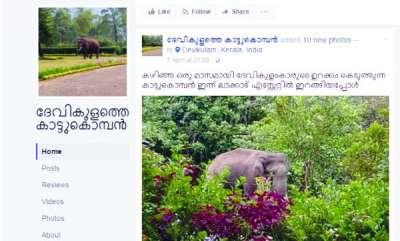 latest-news-elephant