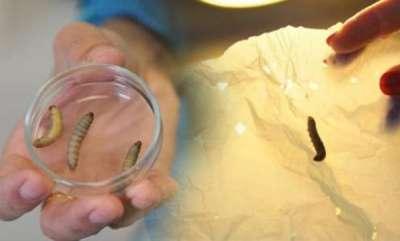 environment-plastic-eating-caterpillar