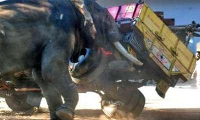 latest-news-elephant-turns-violent-in-ernakulam