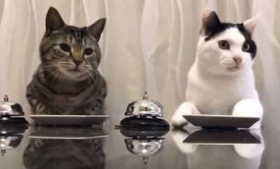 environment-cats-ringing-a-bell-to-get-treats-is-strangely-captivating