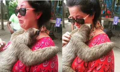 odd-news-woman-weeps-uncontrollably-after-stroking-sloth