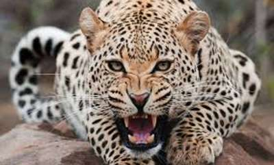 latest-news-dubai-bans-selling-and-buying-dangerous-wild-animals