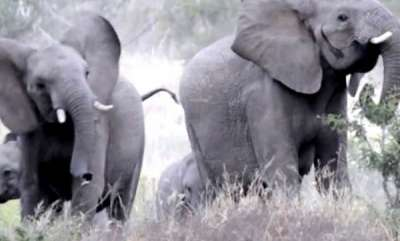 environment-frightened-elephants-scatter-swarm-bees