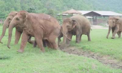 environment-elephants-run-to-greet-orphaned-baby-video