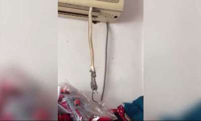 latest-news-just-a-snake-dangling-with-a-mouse