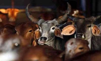 latest-news-beef-issue-supreme-court