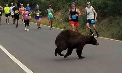 odd-news-teen-killed-by-bear