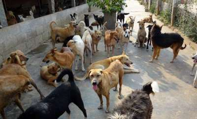 latest-news-farmer-kills-entire-stray-dogs-in-his-hamlet