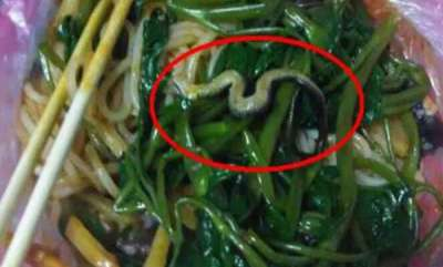 odd-news-student-get-snake-from-noodles