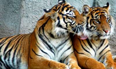 environment-a-tiger-reserve-in-telangana-without-a-single-big-cat