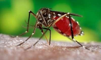 latest-news-dengue-fever-reported