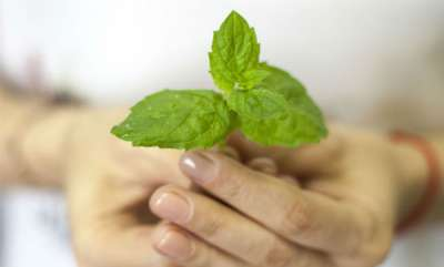 beauty-spot-beauty-benefits-of-mint-5-ways-to-use-pudina-to-get-rid-of-skin-and-hair-woes
