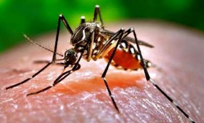 latest-news-fever-death-in-kerala
