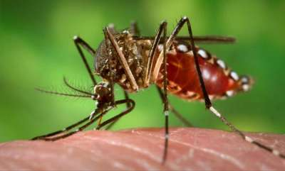 latest-news-dengue-fever-nine-deaths-in-kerala-today