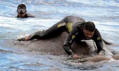 latest-news-swimming-trunk-elephant-rescued-from-ocean-10-miles-off-sri-lanka-coast