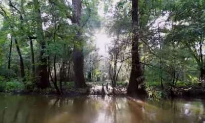 environment-mysterious-ancient-underwater-forest-offers-a-chilling-glimpse-of-earths-grim-future