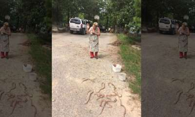 odd-news-elderly-woman-kills-copperhead-snakes-with-shotgun-shovel-and-rake-handle