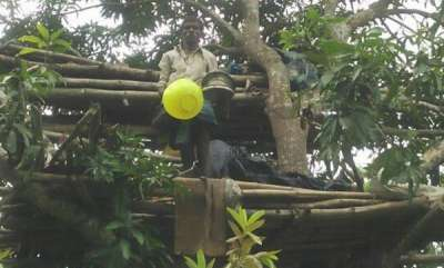 latest-news-tribal-gets-land-rights-after-2-years-of-living-in-a-tree