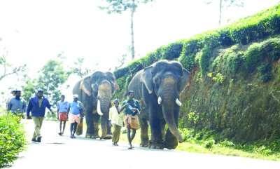 keralam-soman-and-maniyan-starts-petrolling-for-swaying-wild-elephants-in-idukki