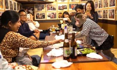 odd-news-monkey-waters-in-japaneses-restaurant