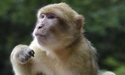 latest-news-monkey-walks-into-delhi-assembly