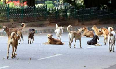 latest-news-chennai-stray-dogs-lead-cops-to-thieves-hiding-under-car