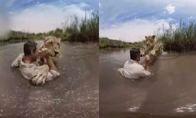 odd-news-lion-jumped-on-man