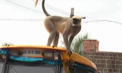 kerala-villagers-complaint-against-drunken-monkey