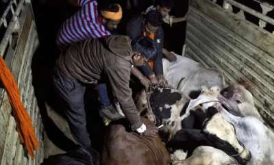 latest-news-muslim-youths-beaten-to-death-by-cow-vigilantes