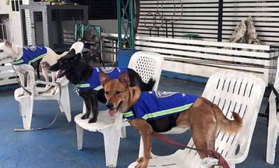 odd-news-stray-dogs-are-working-as-security-guard-here