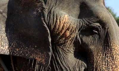 latest-news-elephant-got-stuck-in-mud-rescued