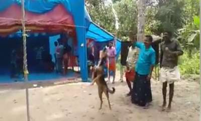odd-news-dog-wins-onam-competition