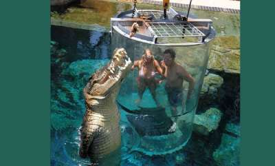 environment-tourists-pay-103-for-a-close-up-with-a-16-foot-man-eating-crocodile-and-theres-just-a-thin-plastic-barrier-protecting-them